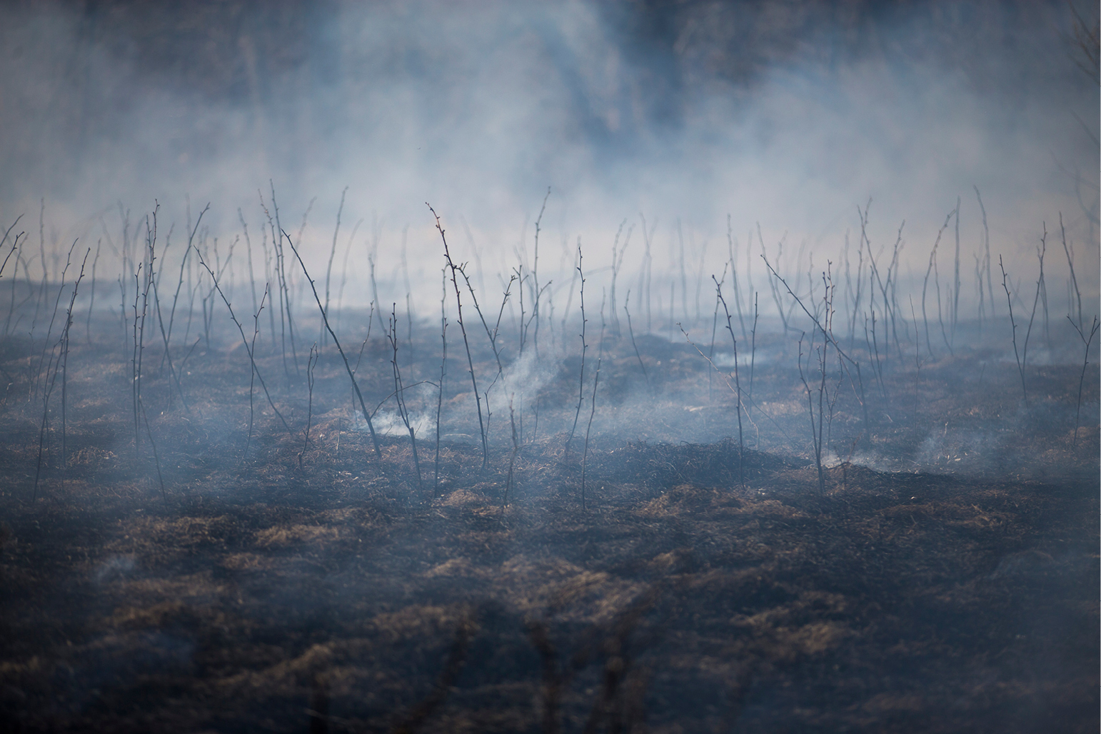 Grass burn in the spring
