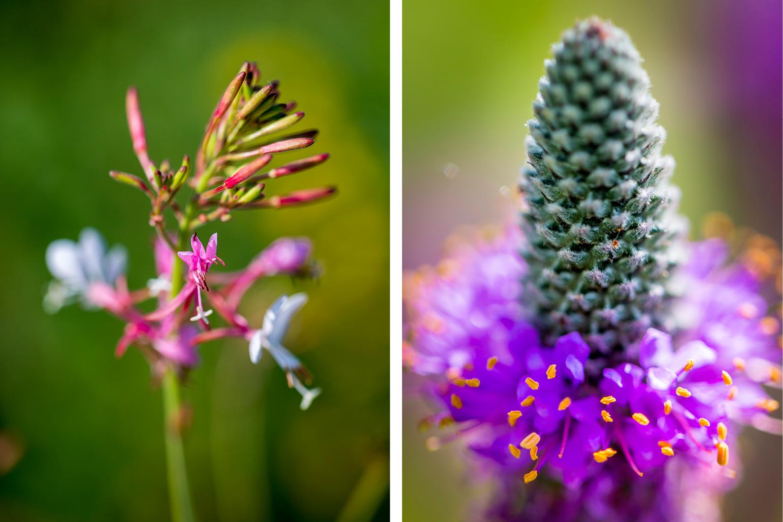 CERA plantlife in the summer