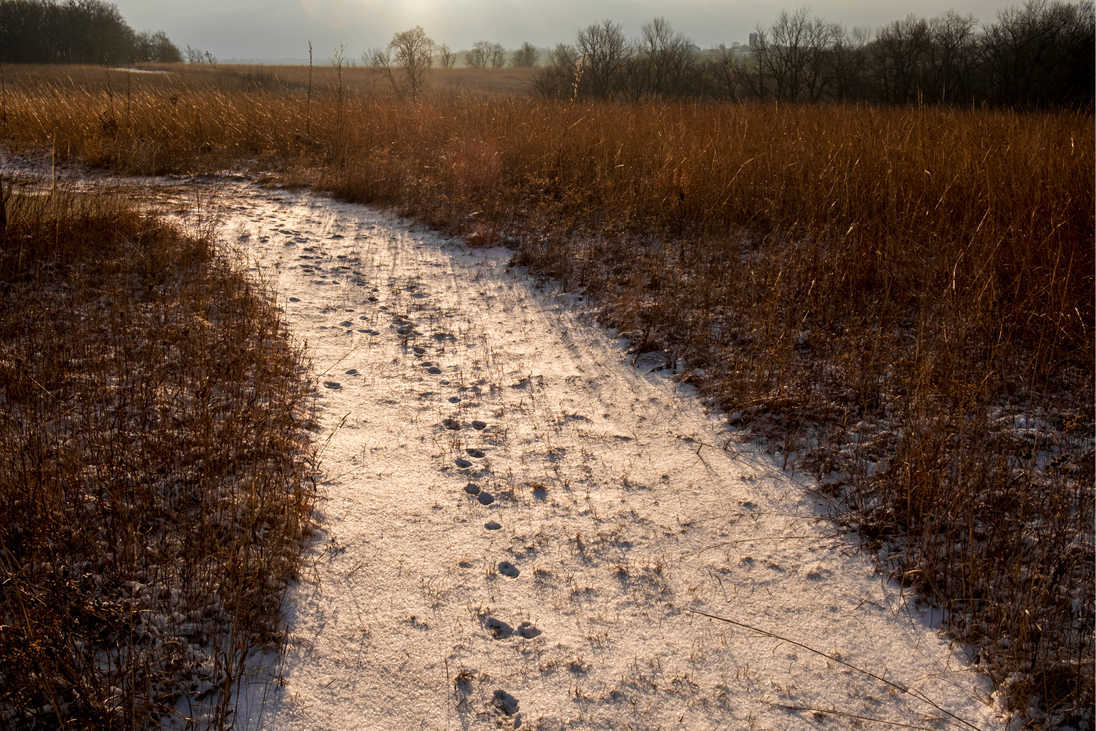 Snowy trail at CERA