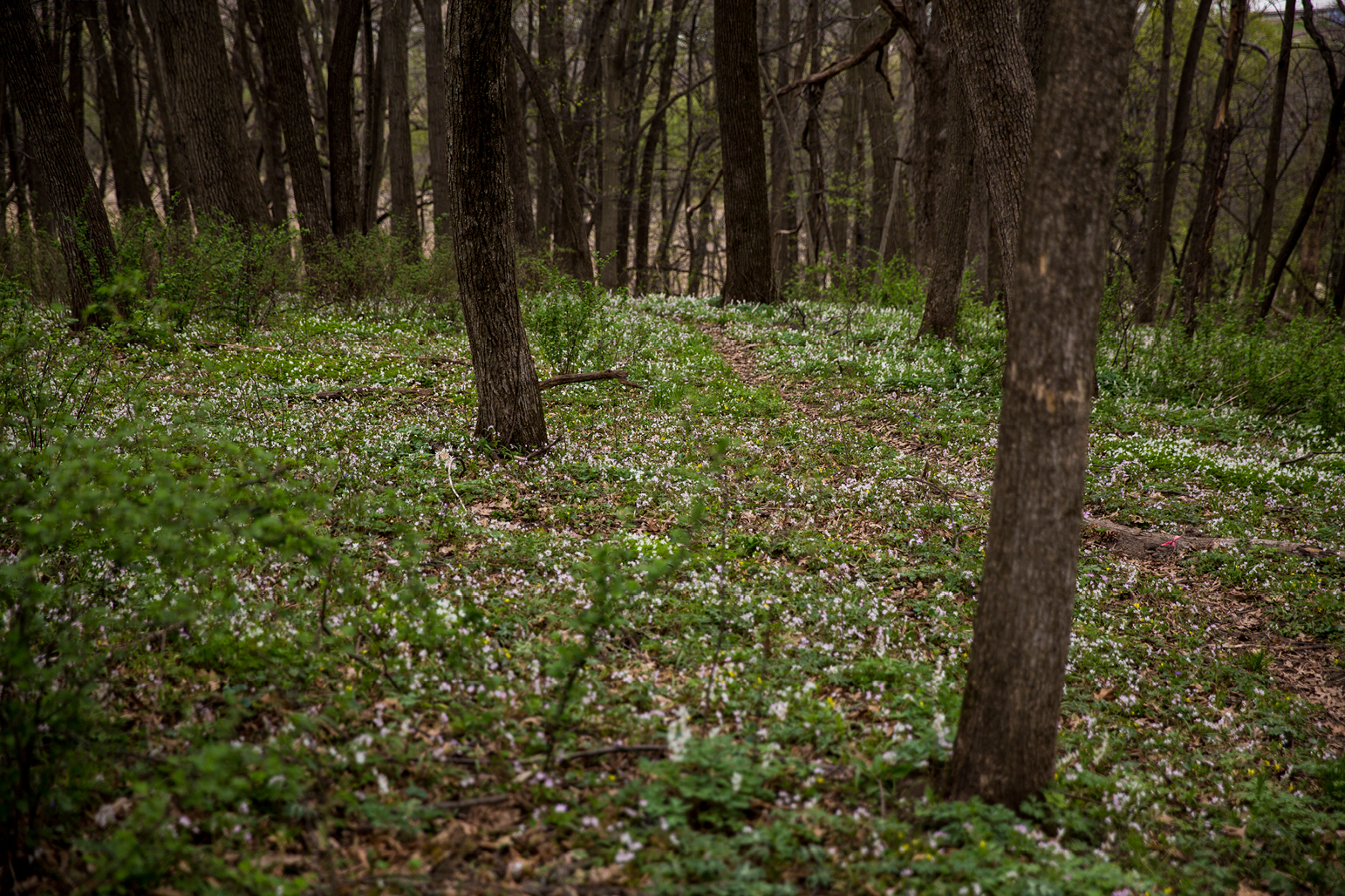 White flowers blooming in the spring