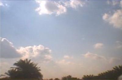 Blue sky, white clouds, and dark palms in Iraq