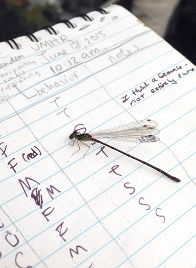 Damselfly sitting on a notes that track flies sex and behavior for June 18, 2015, 10:12 a.m.