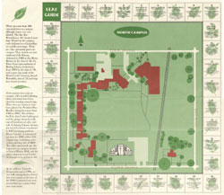 North Campus Leaf Guide