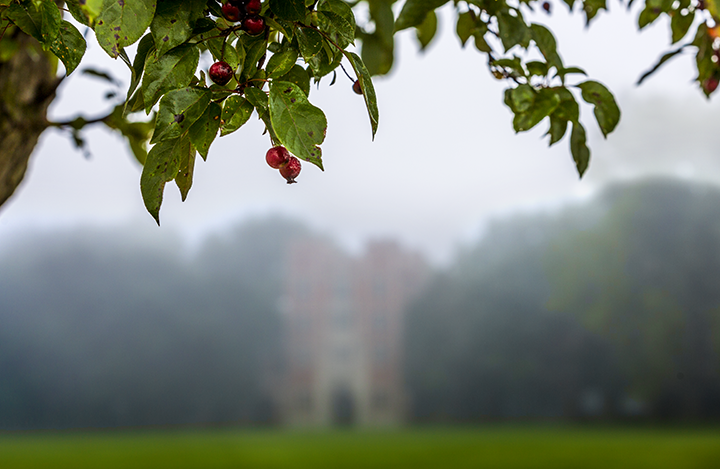 red berries stand out against a backdrop of North Campus obscured by fog