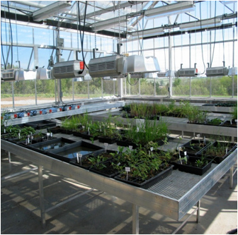 CERA Greenhouse with plants