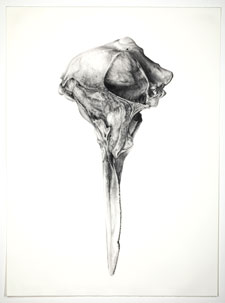 Tara Shukla, Skull