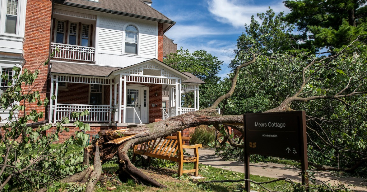 Tree damage from derecho storm near Mears Cottage