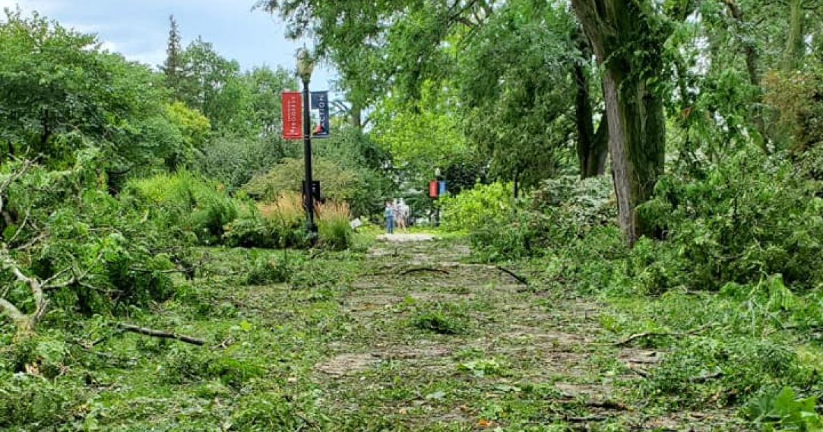 Trees and foliage in the walkway of south campus caused by 2020 derecho