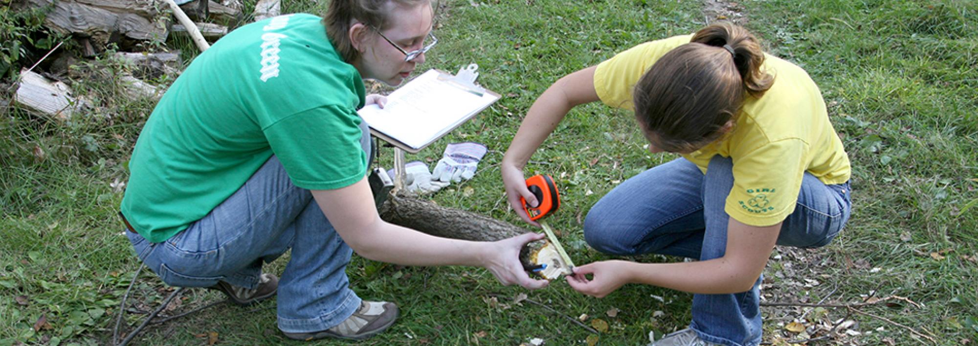 Students measure the diameter of a tree branch