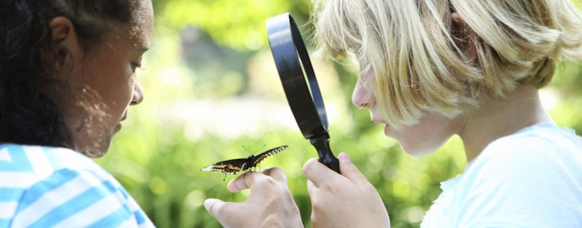 Children examine a butterfly with a magnifying glass
