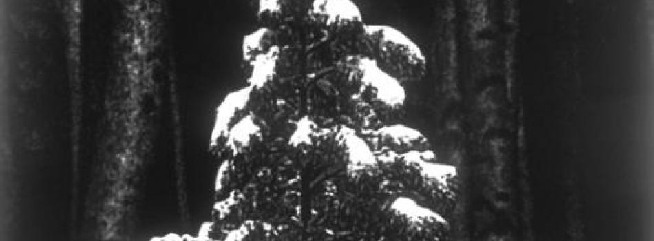 Lorna Bieber, Tree/Tree Trunks, 2005-06