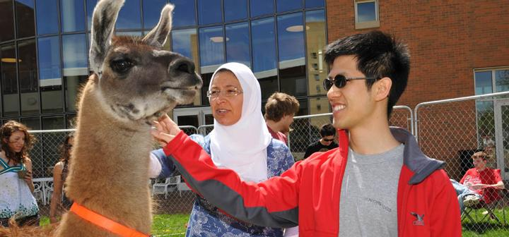 Two people petting a llama