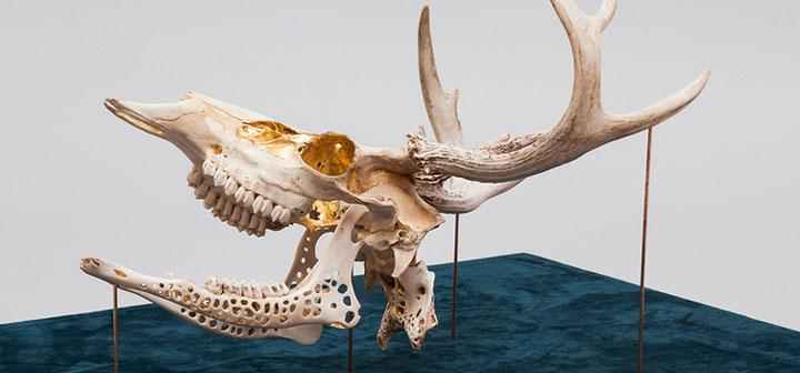 Cure 2016 deer skull and 24 karat gold leaf