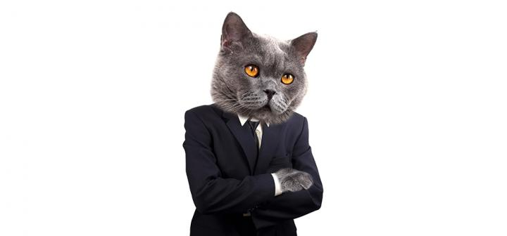 Gray Cat in a suit