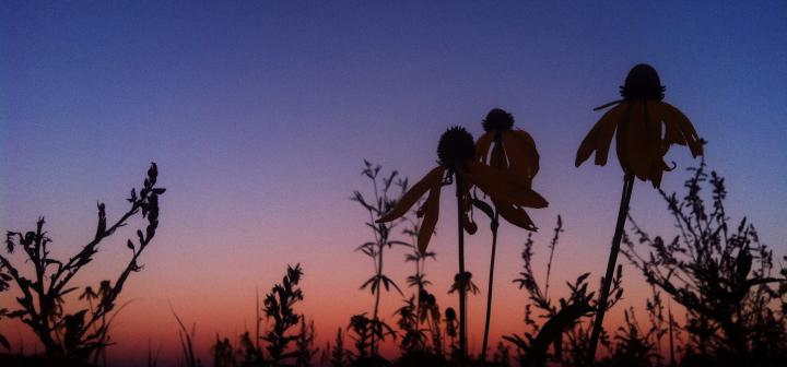 silhouette of forbs against a twilight sky
