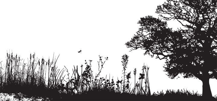 Silhouette of prairie and tree