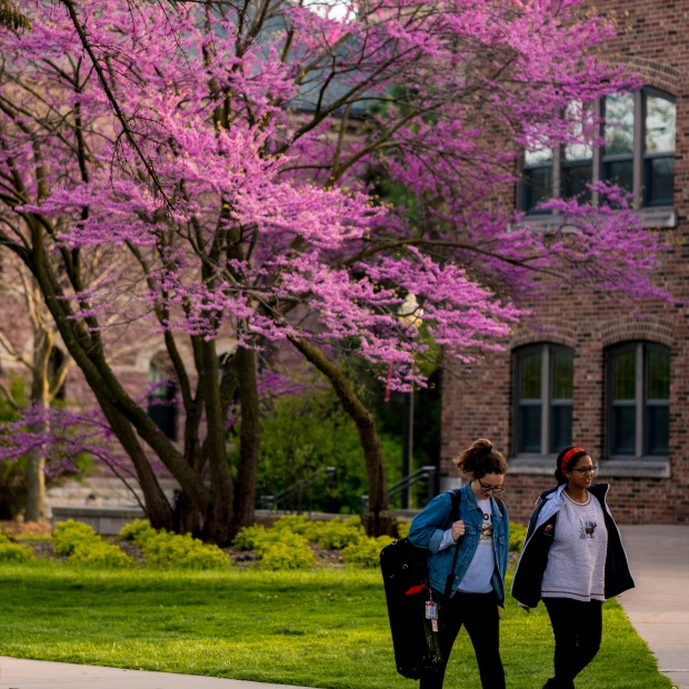 Students pass red bud tree in bloom in front of Goodnow Hall