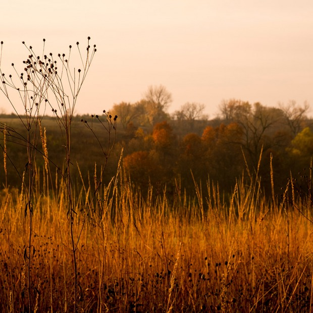 prairie grass in fall