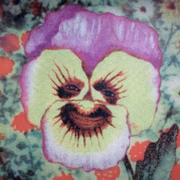 A purple and yellow pansy bloom with details of eyes and a mouth in the center
