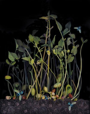 painting of plants growing from decomposing material and insects