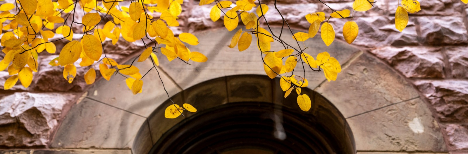 Yellow leaves in front of arched window