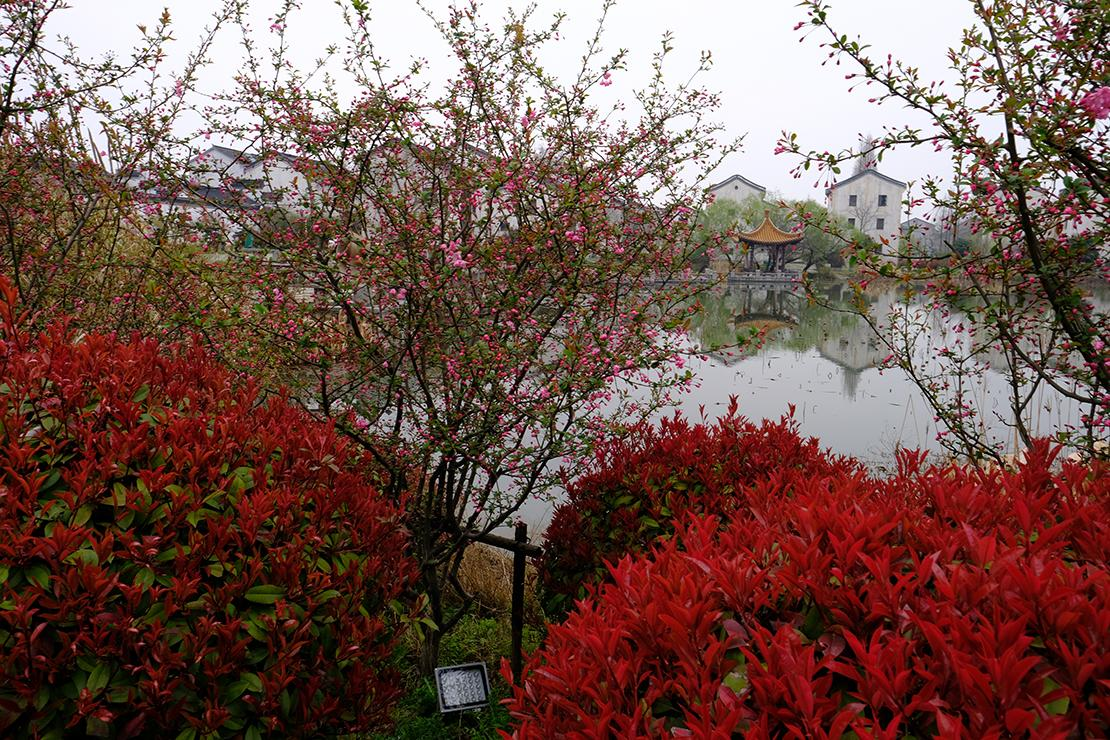 Pink buds and red foliage surrounding the lake.