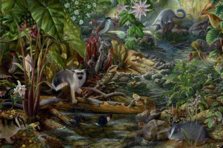 Isabella Kirkland, Forest Floor