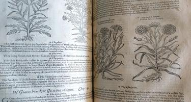 Generall Historie of Plantes image