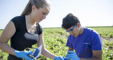 Two students take samples in a field