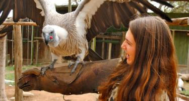 Emily Stuchiner '15 with large bird, wings outstretched, perched on her arm
