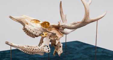 Cure 2016 deer skull and 24 karat gold leaf