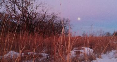 Winter prairie landscape with trees in background and moon in the sky