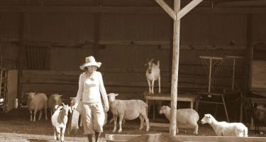 Woman with goats and sheep in open barnyard