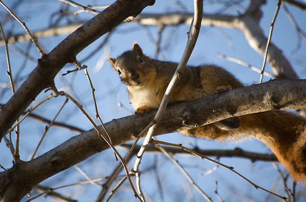 Inquisitive looking squirrel gazed down from a tree branch